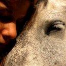 Photo de Horses-photos