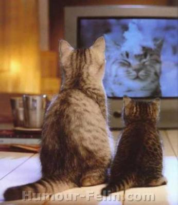 deux chat qui regarde la tele les animaux. Black Bedroom Furniture Sets. Home Design Ideas