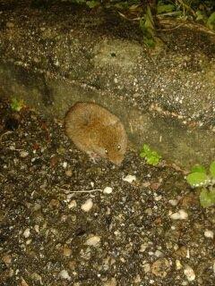 La petite souris enfin rencontrer !
