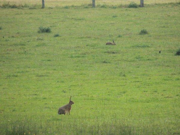 Un duo au milieux de l'herbe
