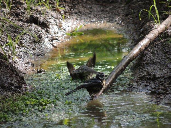 Quelques oiseaux les pieds dans l'eau...