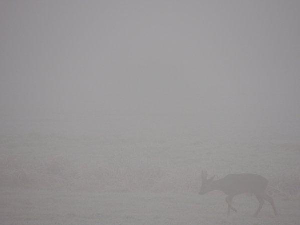 Duo dans la brume...