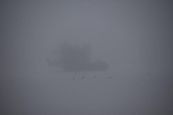 Mer de brume....