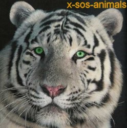 - - - - - - - - - - - - - - - - - X-SOS-ANIMALS- - - - - - - - - - - - - - - - -