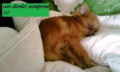 diférente façon de dormir