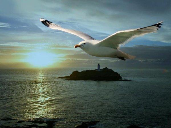 L'âme a des illusions comme l'oiseau a des ailes, c'est ce qui la soutient