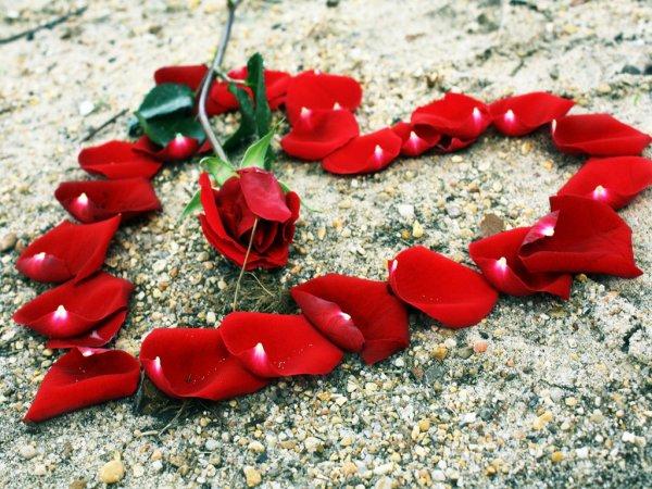 L'amitié est une fleur très rare, il faut bien l'arroser et en prendre soin pour qu'elle fleurisse toujours