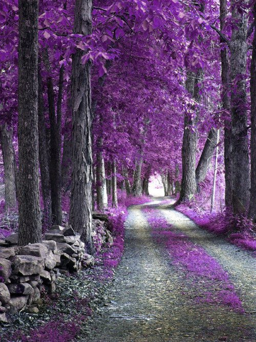 Là où se trouve une volonté, existe un chemin