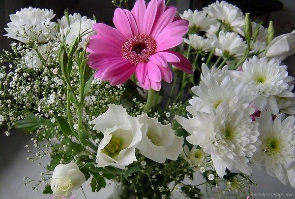 La beauté plait aux yeux, la douceur charme l'âme