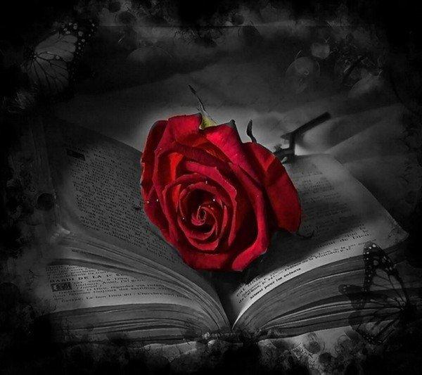 L'esprit s'enrichit de ce qu'il reçoit, le coeur de ce qu'il donne