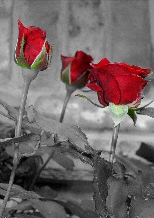 Tout amour semé, tôt ou tard, fleurira