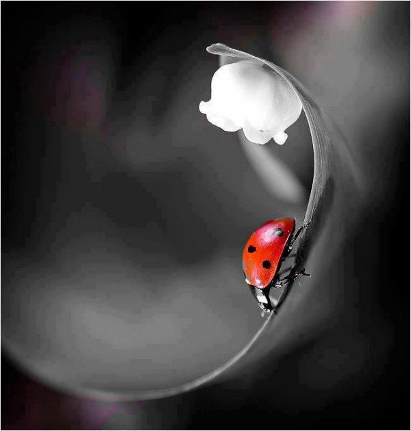 Lorsque l'esprit est libre, tout est libre autour de soi