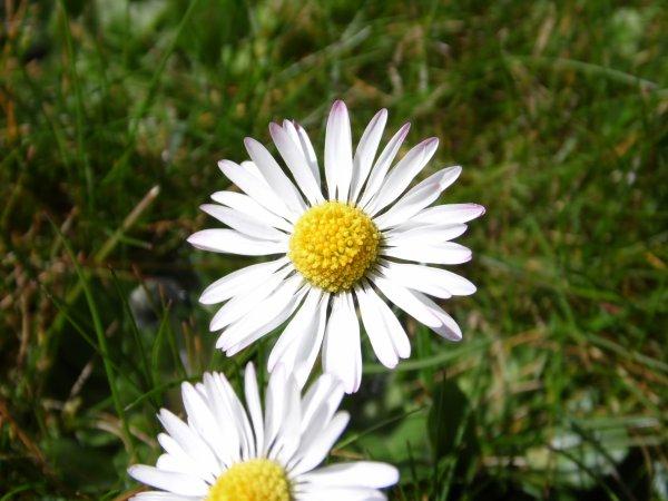 . floral..