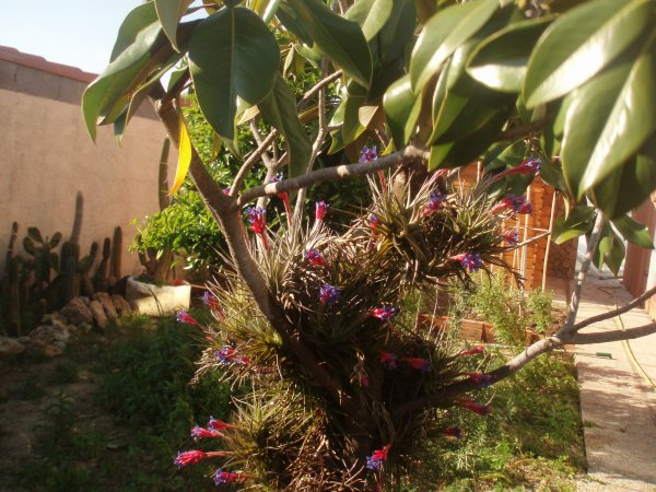 très jolie flore, colle a mont camélia!!