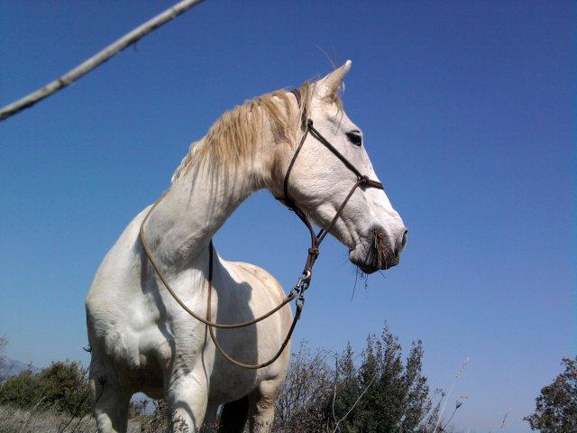 Voila mes 4 chevaux BOhémiien,Natiive,Isiis et sans Oùbliié biiensùr Evéra =)