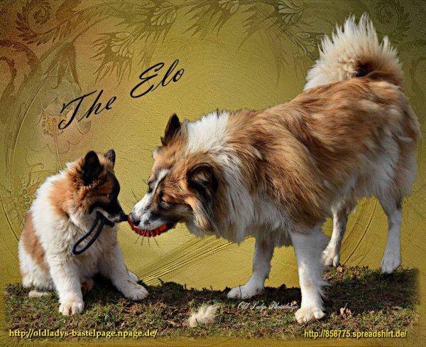 Sakira mit Ayla, genannt Happy (Elo)