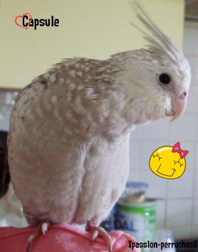La présentation de nos birds !!
