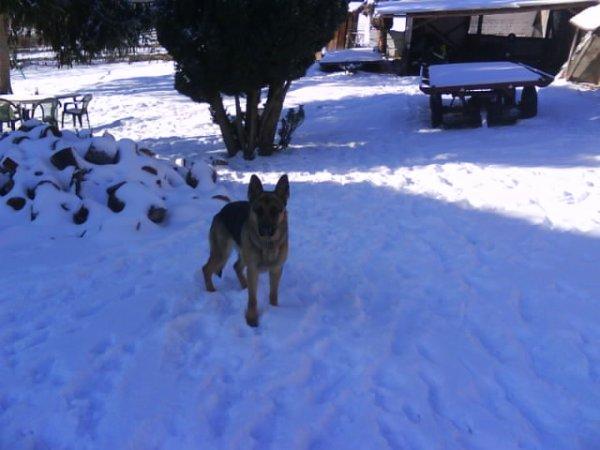 ma lola dans la neige