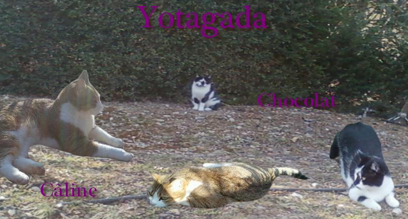 Les Yotagada Pets
