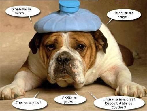 une p'tit note d' humour !!!!!!!!!!!!!!!