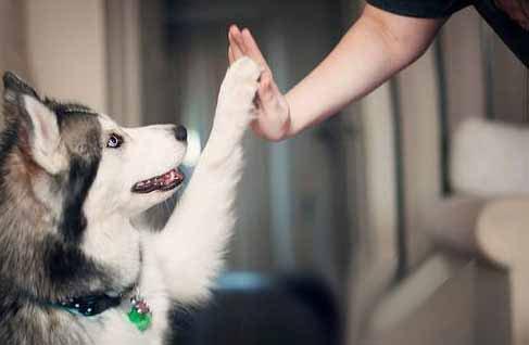 Les chiens font la différence entre les mots et les intonations