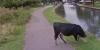 Maintenant, Google Street View floute même le visage des vaches, histoire de les respecter