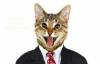 Facebook censure la photo d'un chat en costume