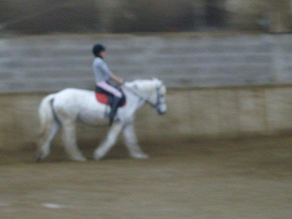 Blog de Fan-de-chevaux7
