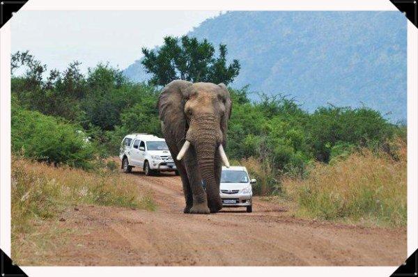 Protection de la nature et des animaux !
