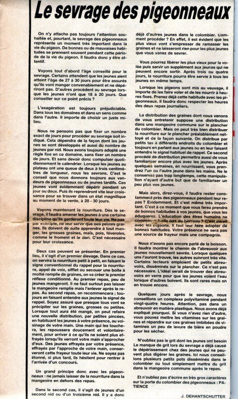 le sevrage des pigeonneaux (1984)