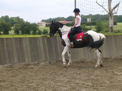 centre equestre 101