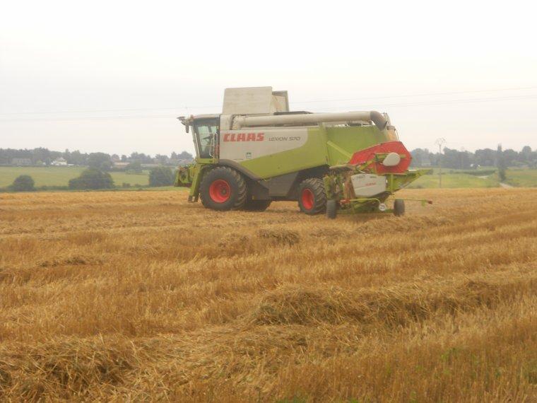 moison de blé 2013