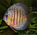 Photo de aquarium1