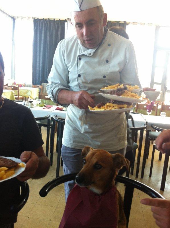 Chez André mème les chiens ce régale !!!