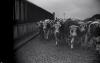 """Documentaire Vidéo _ _ """" Le sang des bêtes """""""