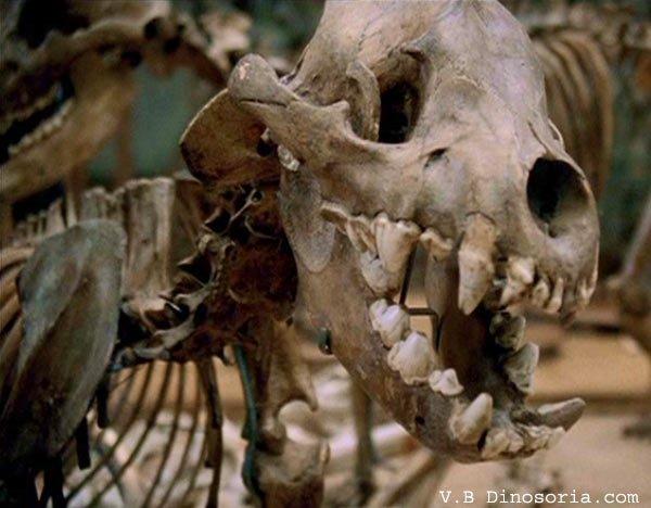 Vie quotidienne de l'homme préhistorique _ _ Mode de vie de l'Homme de Neandertal
