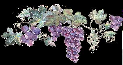 Domaines et vins _ Altenberg-de-bergheim