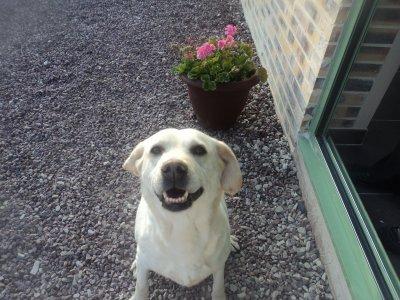 mon chien trop beau