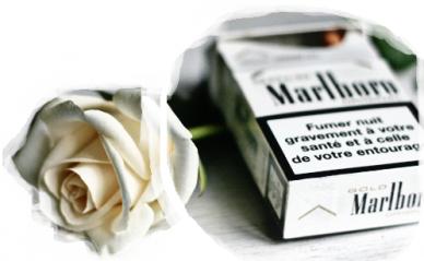 """Si sur les paquets de clopes il y avait marqué """"Fumer rend roux """" à la place de """"Fumer tue"""""""