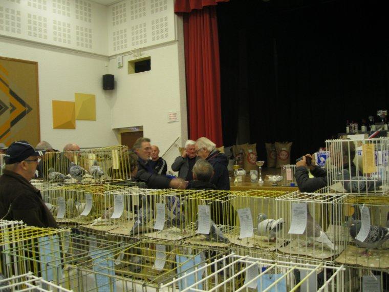 Plus de 500 pigeons exposés ce week-end à LOISON - Nous avons rendu visite à nos amis et exposés quelques pigeons dans plusieurs catégories, remporté un 1er Prix en catégorie Femelles 1An et un 7ème Prix en catégorie Jeunes Mâles - Trés belle journée