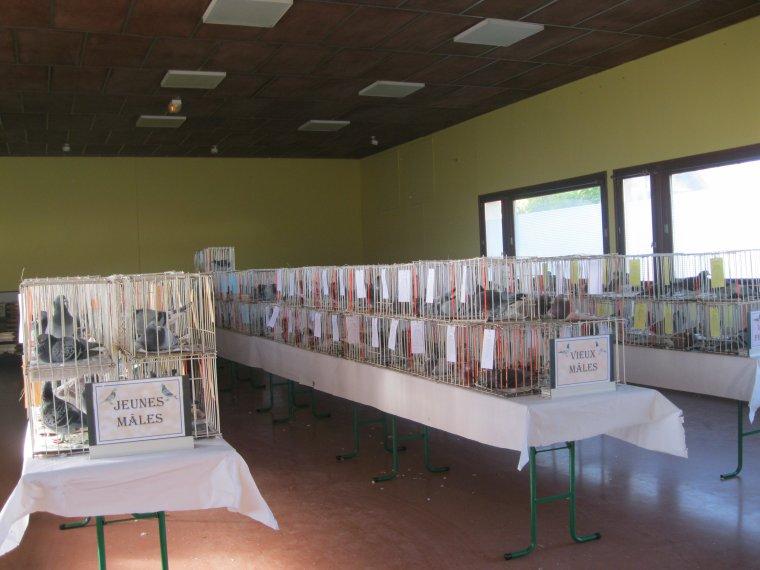 EXPOSITION REUSSIE POUR L'ALBATROS D'ACHICOURT