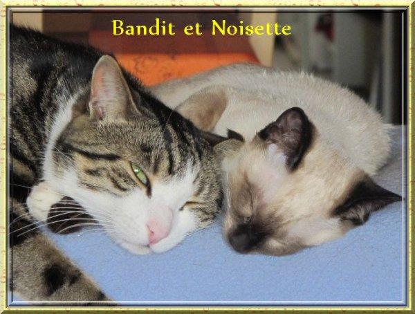 2 DE MES CHATS  BANDIT ET NOISETTE ; QUEL AMOUR !