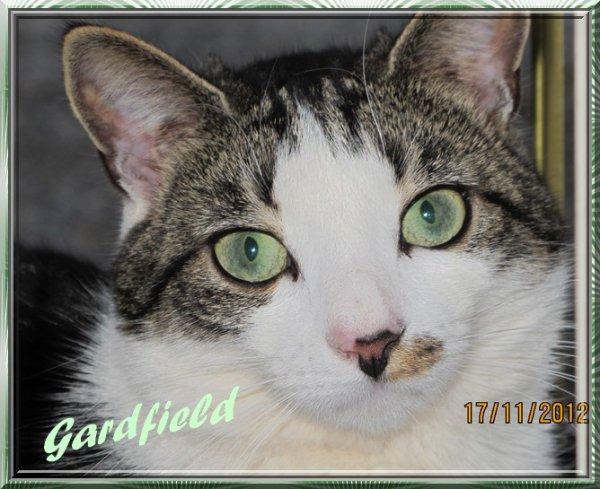 Mon chat Gardfield