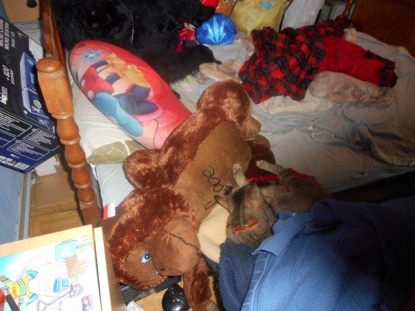 grisette est restée chez le vétérinaire elle sera opérée demain matin et reviendra dans la prés midi