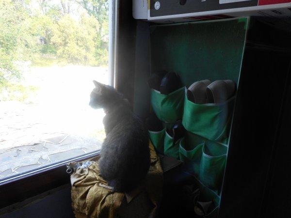grisette se repose a la maison elle profite d être seul a la maison avec nous