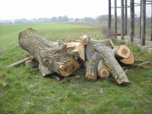 Un peut de bois