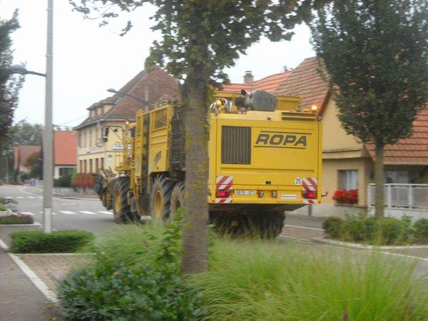 ROPA EURO TIGER juste devant chez moi