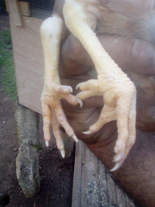 Elle a 5 doigt à chaque pattes