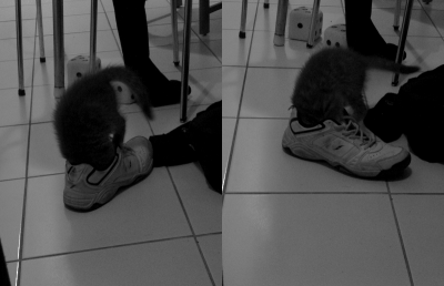 Xena ... fouille dans les chaussures !