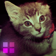 Photo de kitten-xena